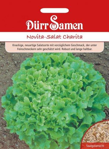 Novita-Salat Charita