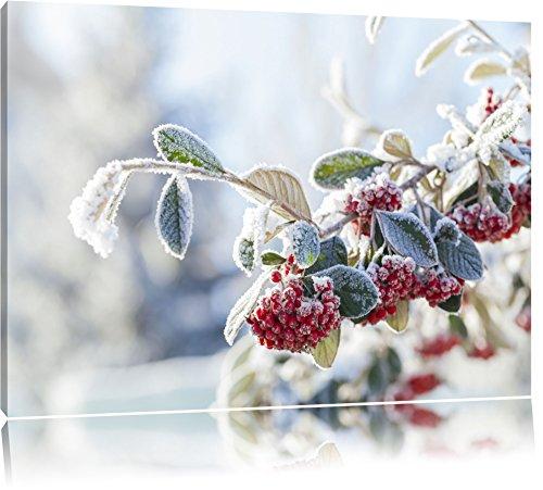 Vogelbeeren im Winter Format: 120x80 auf Leinwand, XXL riesige Bilder fertig gerahmt mit Keilrahmen, Kunstdruck auf Wandbild mit Rahmen, günstiger als Gemälde oder Ölbild, kein Poster oder Plakat