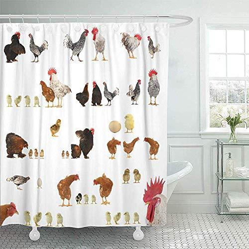 GABRI Duschvorhang wasserdichter roter Bauernhof-Hühnergeschichten auf weißem Tier-Hühnerei-Hahn Chick Rooster Poultry Set Curtain