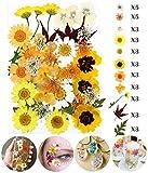 Longwu Naturali Pressati Fiori,per Mestiere di Arte di Scrapbooking Resina Epossidica Gioielli Che Fanno Regali DIY Art Craft Scrapbooking
