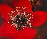 Graham & Brown 41–501Golden Glow Purpurina Impreso Lienzo Pared Arte