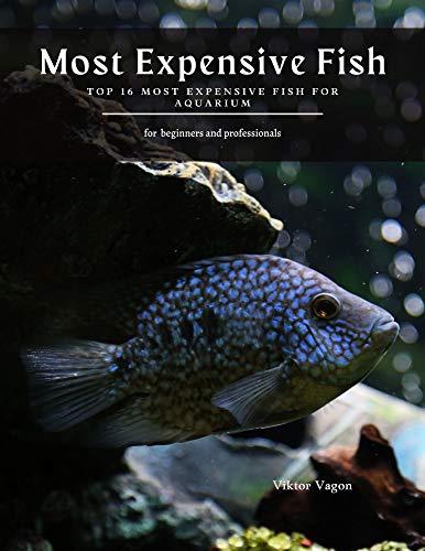 Most Expensive Fish: Top 16 Most Expensive Fish For Aquarium