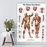 LPHMMD Versión de análisis de Partes del Cuerpo Humano Cartel Pintura en Aerosol Decoración de consultorio médico Arte de Pared Doctor-50x70cm