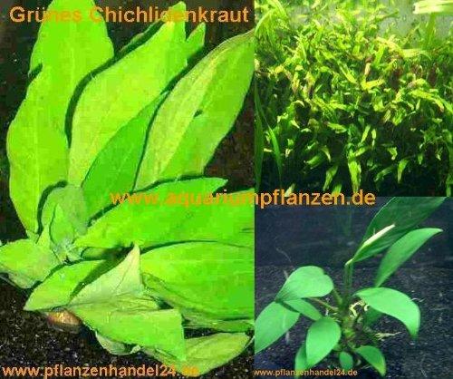 Mühlan Topartikel- 4 Topf barschfeste Wasserpflanzen, Aquarium