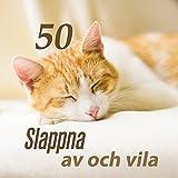 50 Slappna av och vila: Naturliga hypnos, Inre balans, Djup sömn musik, Enkla stillhet, Dröm...