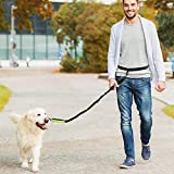 Running Dog Leashes Review and Comparison