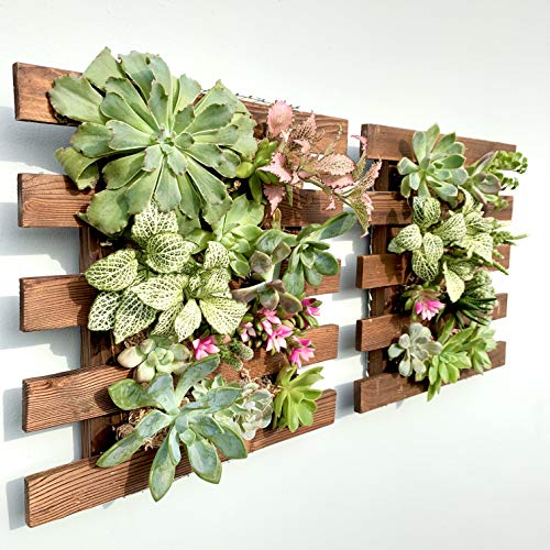 Wall Planter – 2 Pack Wooden Hanging Succulent Wall Decor, Live Air Plants Orchids Wall Mounted Holder Frame Display for Indoor Outdoor, Living Plant Wall Decorations for Balcony Garden, Living Room