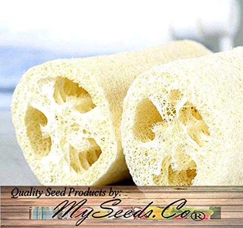 Big Pack - (100) Luffa Luffa Cylindrica Loofah Seeds - Dishcloth Or Luffa Gourd...