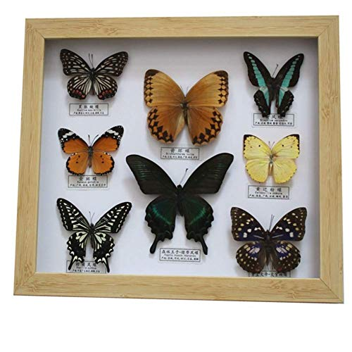 SHUAI 12 Inch Picture Frame True Butterfly Craft Home Decoratie Grote fotolijst Kinderen Verjaardagscadeau Collectie