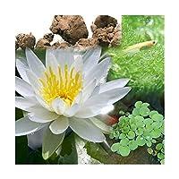 (ビオトープ)(めだか)ビオ植物とメダカセット 睡蓮(スイレン) 白 鉢なしセット 本州四国限定