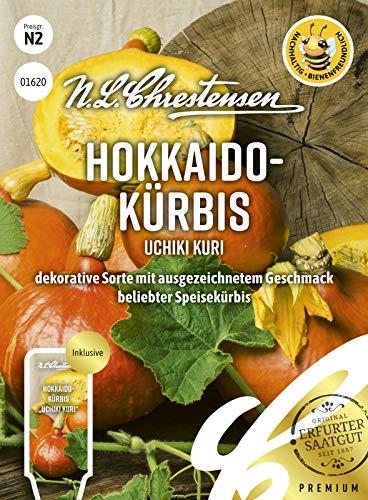 Hokkaido- Kürbis Uchiki Kuri, bienenfreundlich, dekorative Sorte mit ausgezeichnetem Geschmack, Samen