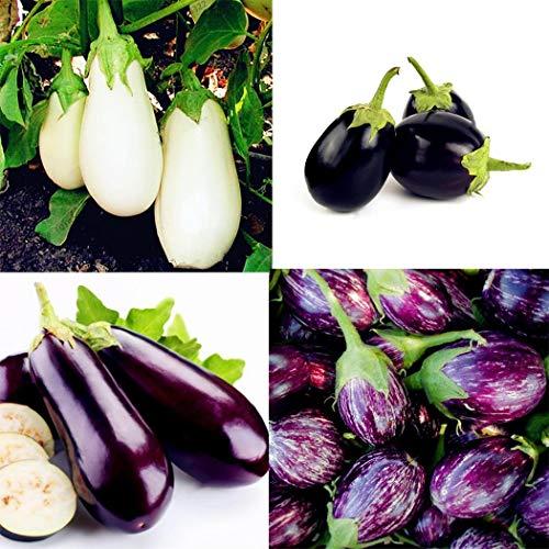 Ultrey Samenshop - 200 Stück Mini-Aubergine Mix Samen Topf-Aubergine Mischung Aubergine - Gemüse Saatgut mehrjährig winterhart für Garten Balkon/Terrasse