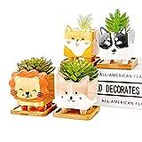 Set di 4 vasi per piante grasse a quadrifoglio, con sottovaso, in ceramica, design creativo, 4 pezzi