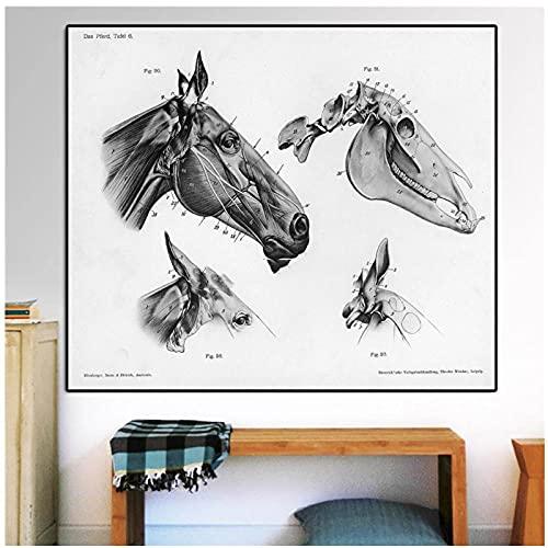 FUXUERUI Vintage Medical Horse Head Skull Anatomy Illustration Wall Art Poster Canvas Prints Pintura Cuadros para Office Clinic Wall Decor,40x60cm Sin marco