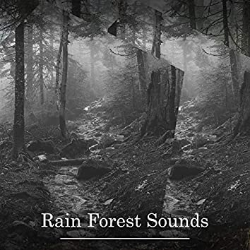 Rain Forest Sounds – Soothing Ambience for Relaxation, Meditation, Stress Relief, Better Sleep, Calmness and Serenity