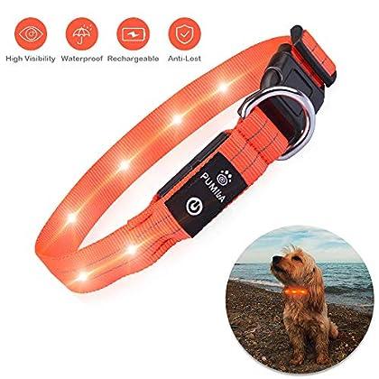 ♔ HOHE SICHTBARKEIT & HOHE QUALITÄT - Superhelles LED-Hundehalsband, damit Ihr Hund in der Dunkelheit sicher ist und Sie Ihr Haustier leichter finden. Super starkes 100% Polyester-Gurtmaterial mit hochfesten Nähten für maximale Festigkeit und Hundesi...