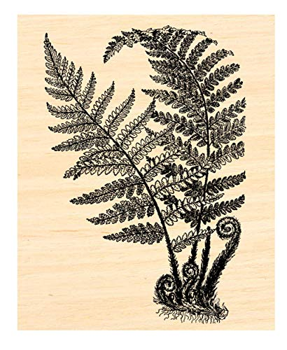 Large Fern Rubber Stamp P53