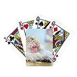 Monkey Organism Animal Photography Poker Jugando Magic Card Fun Juego de mesa