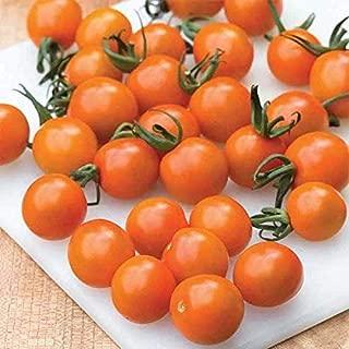 Best orange paruche tomato seeds Reviews