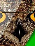 Owl's Odyssey