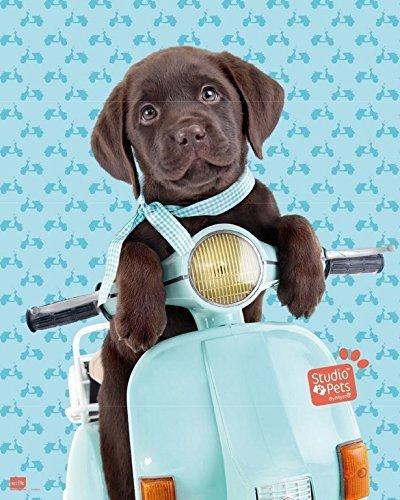 Grupo Erik Editores Mini Poster Studio Pets Dog Scooter