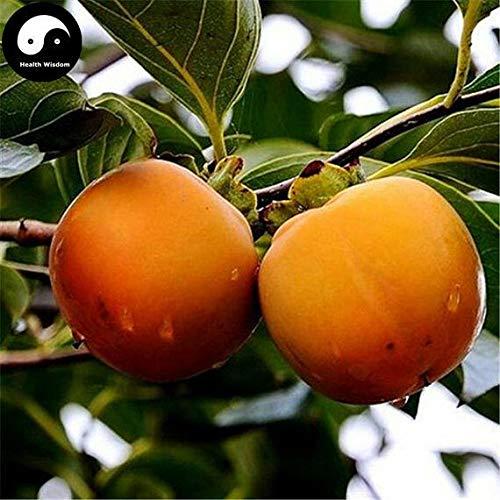 PLAT FIRM GERMINATIONSAMEN: 30 stücke: Kaufen Persimmon Obstbaum Samen Pflanze Diospyros Kaki Für Chinesische Frucht Shi