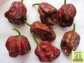 Liveseeds - Douglah (7 Pot Chocolate)Chili Pepper x 10 Seeds Super Hot