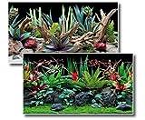 *Amtra Deko Fotorückwand Flora beidseitig Bedruckt 150x60cm 2in1 Rückwandposter Rückwand Folie Aquarien Poster Foto Folien