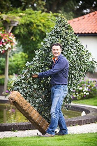 GartenBronder Mobilane Fertighecke® - Efeuhecke - Sichtschutz - Hecke - H 180 x B 120 cm - Das Original (4X H 180 x B 120cm)