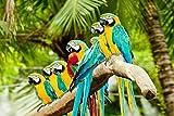 Papagei Vogel Tier XXL Wandbild Foto Poster P0101 Größe