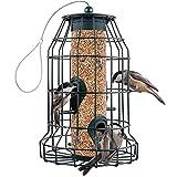 Best Bird Feeders - Squirrel Resistant Bird Feeders 22 oz. Large Bird Review