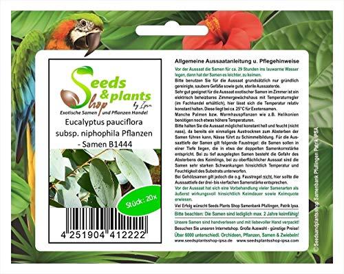 Stk - 20x Eucalyptus pauciflora subsp. niphophila Pflanzen - Samen B1444 - Seeds Plants Shop Samenbank Pfullingen Patrik Ipsa