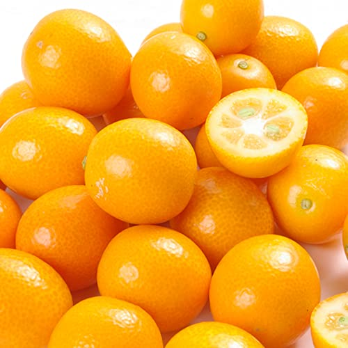 柑橘 宮崎産 完熟きんかん「たまたま」 1kg 1箱 化粧箱入り 食品