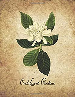 Oval Leaved Gardenia: Vintage Floral Notebook With College Ruled Lined Pages for Writing and Journaling (Beautiful Flowers & Fruits Note Books)