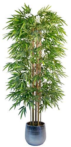 pianta bambu ikea