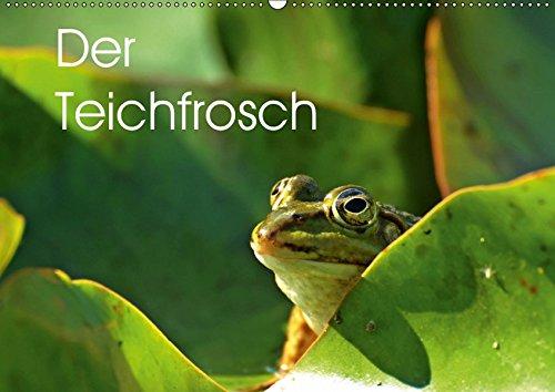 Der Teichfrosch (Wandkalender 2019 DIN A2 quer): 13 Teichfrösche, abgelichtet in ihrem natürlichen Lebensraum. (Monatskalender, 14 Seiten ) (CALVENDO Tiere)