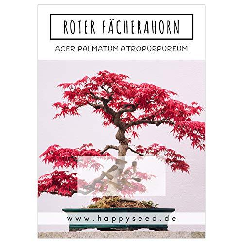 Außergewöhnliche Bonsai Samen mit hoher Keimrate - Pflanzen Samen Set für deinen eigenen Bonsai Baum (1x Roter Fächerahorn)
