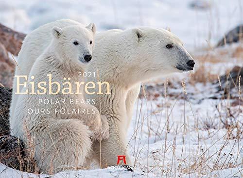 Eisbären Kalender 2021, Wandkalender im Querformat (45x33 cm) - Tierkalender