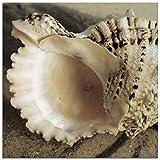 Artland Qualitätsbilder I Glasbilder Deko Glas Bilder 20 x 20 cm Tiere Wassertiere Muschel Foto Creme A5MZ Strandimpressionen II - Muscheln