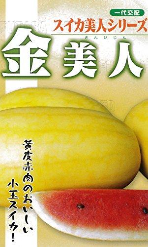 フタバ種苗 【一代交配】 西瓜 金美人 (スイカ) 種・小袋詰(10粒)