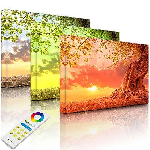 Lightbox-Multicolor | Leuchtendes LED Bild | Verwurzelter starker Baum im Sonnenuntergang | 100x70 cm | Fully Lighted