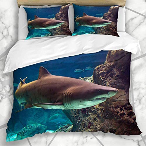 LIS HOME Bettbezug-Sets in Unterwasser Natural Fright Hunter Aquarium Riff Konzept Tauchen Kreta Tiere Leben Wildlife Natur Weiche Mikrofaser Dekoratives Schlafzimmer mit 2 Kissen Shams
