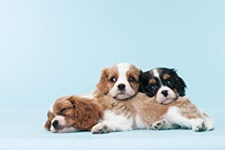 Best cavalier king charles spaniel posters Reviews