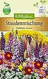 Portal Cool Staudenmischung Kalb Arten, Staude Sträucher, Ca. 100 Samen 5488