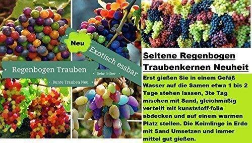 15x Arc RAISINS Multicolore graines semences Plant rarité obstneuheit #140