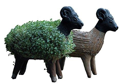 Lassen Sie Ihr eigenes Kresseschaf gedeihen (Inklusive Kressesamen). Fair gehandelt. Handarbeit aus Mexiko. Schaf.