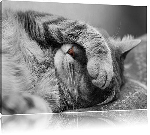 mignon sommeil noir / blanc Taille chat: 80x60 sur toile, énorme XXL Photos complètement encadrée avec civière, art impression sur murale avec cadre, moins cher que la peinture ou la peinture à l'huile, aucune affiche ou un poster