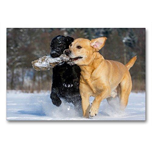 Labrador Retriever – un corazón sobre 4 patas., 90x60 cm