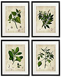 Vintage Botanical Floral Print Art Home Wall Art Set of 4 Prints on amazon