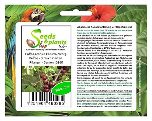 Stk - 10x Coffea arabica Caturra Zwerg Kaffee - Strauch Garten Pflanzen - Samen ID260 - Seeds Plants Shop Samenbank Pfullingen Patrik Ipsa